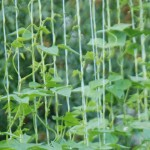 The Ultimate DIY Pole Bean Trellis