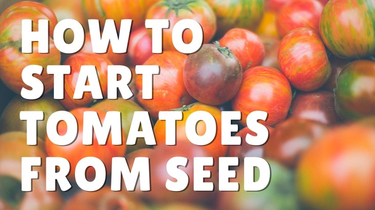 How to start tomatoes from seed